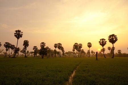 palm trees sunrise golden blue sky backlight in Phetchaburi Thailand Stock Photo - 12941748