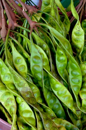 southern thailand: Close up of Parkia speciosa  -  Bean from southern of Thailand