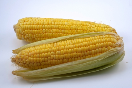 Fresh corn cobs on white background  photo