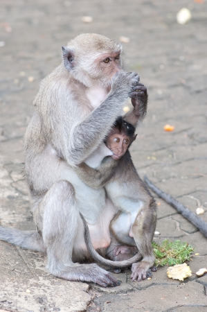 a little monkey with it s mom are sitting on the ground photo