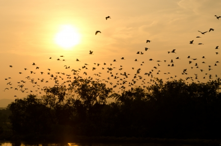 sunset and birds in the sky photo