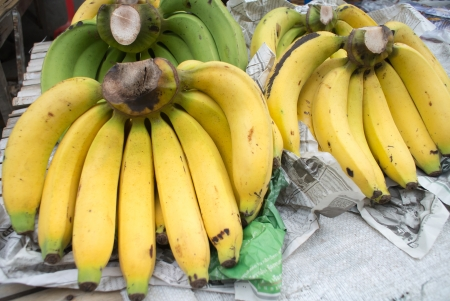 Gros Michel banana,cultivated banana Stock Photo - 20393586