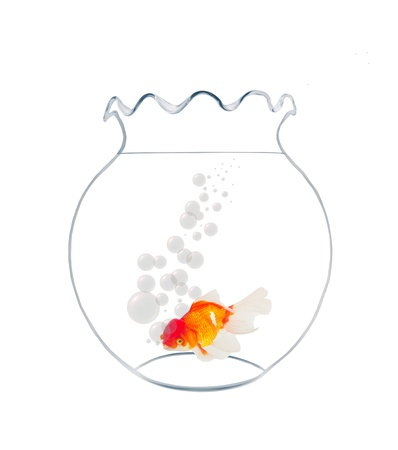 golden fish in fishbowl isolated on white background Stock Photo - 20445882