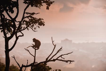 monkey on the tree photo