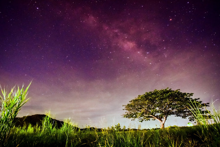 Big tree under milky way at Hua Hin Thailand Stock Photo
