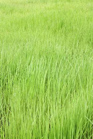 background, agriculture Stock Photo