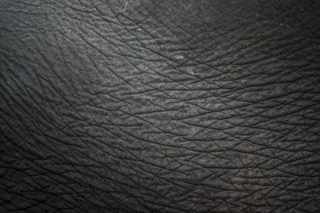 Closeup on the dusty gray elephant skin