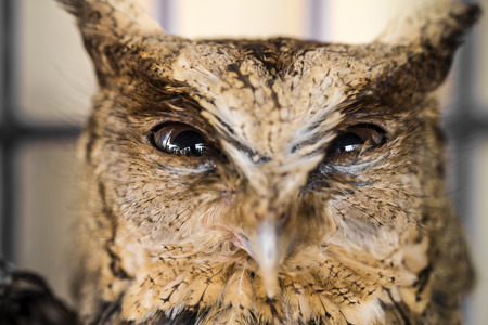owl eye: Close up of owl eye. Big Eyes. Wisdom Stock Photo