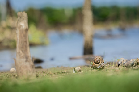 Snail dead beside the reservoir, Close-up and Soft-focus