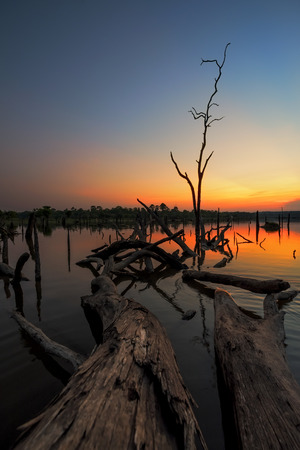 Beautiful dead tree in lake at twilight time, Long exposure technique And Colorful image