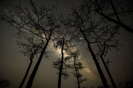 Milky way over trees in forest