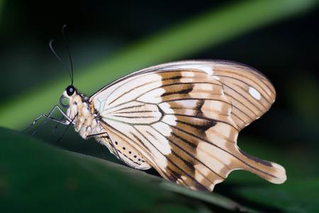 botanica: Butterfly