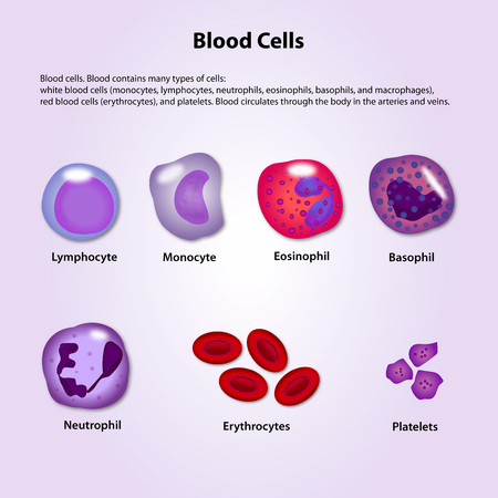 macrophages: blood cells