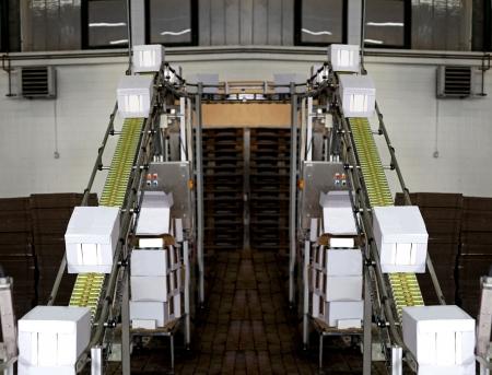 conveyor belts: Industrial conveyor line transporting package boxes