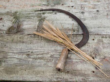 Bunch of mown wheat ears with vintage handmade reaper hook sickle on wooden board Standard-Bild