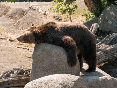 The grizzly bear also known as the silvertip bear, the grizzly, or the North American brown bear, is a subspecies of brown bear that generally lives in the uplands of western North America.