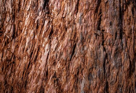 Abstract Tree texture. Tree wooden texture background.