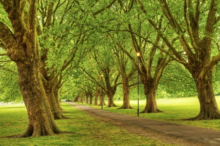 Leafy avenue of trees in park