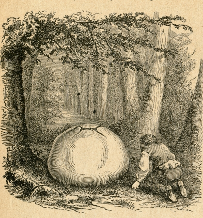 Calvatia gigantea, commonly known as the Giant puffball - old illustration by unknown artist from Botanika Szkolna na Klasy Nizsze, author Jozef Rostafinski, published by W.L. Anczyc, Krakow and Warsaw, 1911 Stock Photo - 14816131
