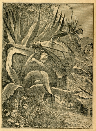 Mexican harvesting agave juice and holding a leather bag - old illustration by unknown artist from Botanika Szkolna na Klasy Nizsze, author Jozef Rostafinski, published by W.L. Anczyc, Krakow and Warsaw, 1911