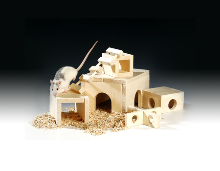 House for a mouse from a natural tree