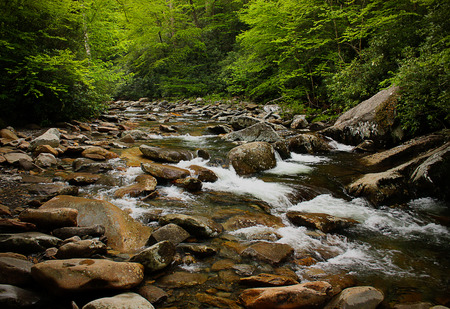 great smoky national park: Stream in the forest of Great Smoky National Park