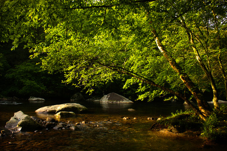 great smoky national park: Stream in the forest in The great smoky national park Stock Photo