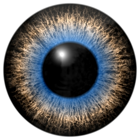 Grey and blue eye isolated element on white background