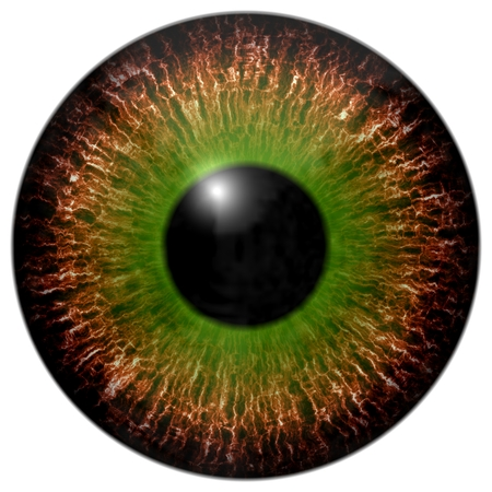 green eye: Brown green eye iris isolated element on white background