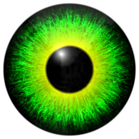 and he shines: Green yellow eye iris isolated element on white background