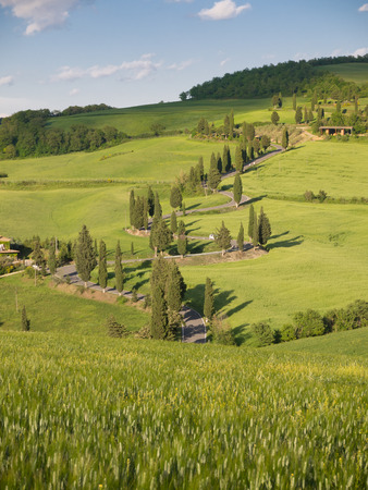Winding road lined with cypresses near monticchiello in Tuscany photo