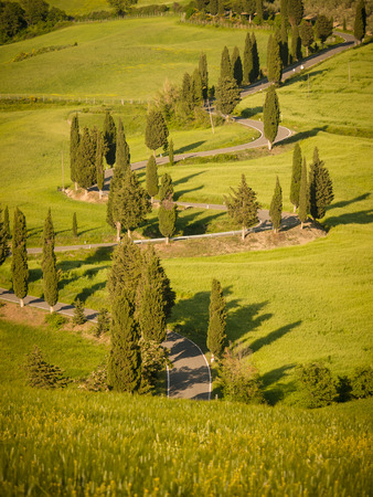 Winding road lined with cypresses near Monticchiello in Tuscany at sunset photo