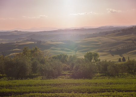 Panoramic view on field in Tuscan landscape turning pink at sunset photo