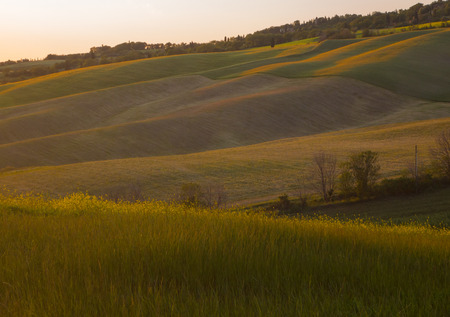Panoramic view on field in Tuscan landscape colored by the setting sun photo