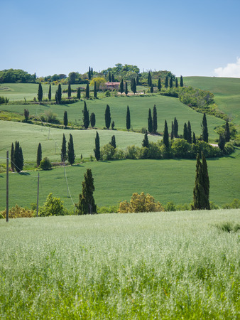 Winding road lined with cypresses in Tuscany photo