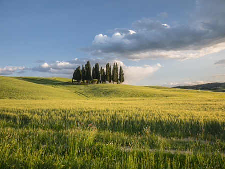Group of cypress tree in Tuscan landscape of the Val d'Orcia under a sky with low clouds as the suns starts to set photo