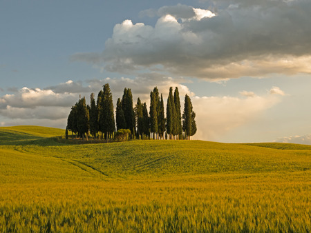 Group of cypress tree in Tuscan landscape of the Val d'Orcia as the sun starts to set turning the field orange photo