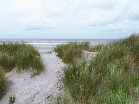 desert ecosystem: Grasses blowing in the wind along the coast of Ameland in the Waddenzee Stock Photo