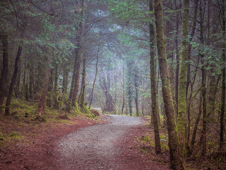 Forest road in Galloway Park, Scotland Imagens