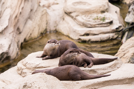 Close-up of sea otters