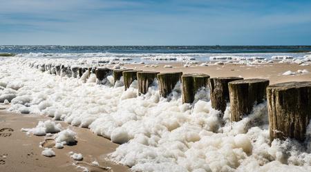 Foam algae along the Dutch coast