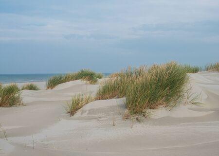 Grassy dunes on the island of Terschelling 免版税图像