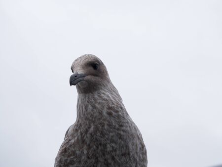 Close-up of a herring gull against the sky