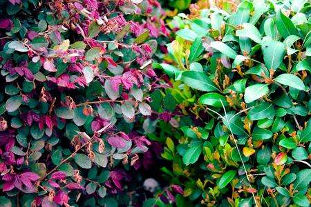 Unlike Leaves