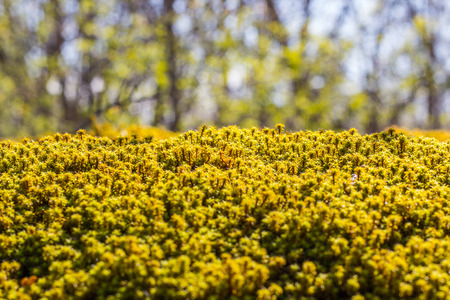 Green and yellow moss background photo