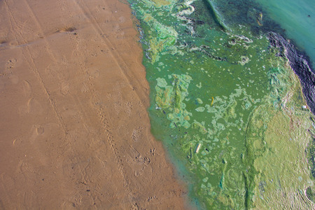 pollution water: Polluted water at the coastline