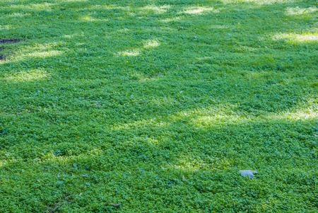 Field of green grass photo
