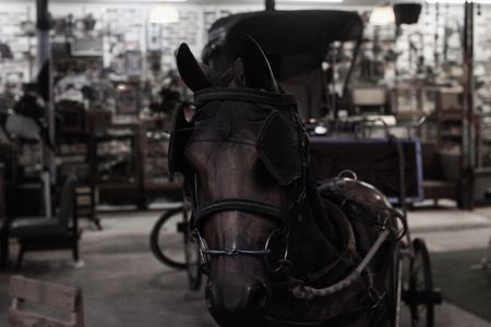 30 year old: 30 year old horse harness