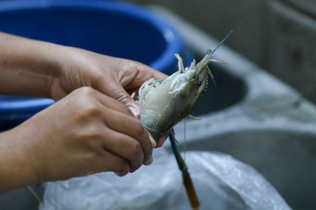 shrimp cocktail: The peeled shrimp for cooking Thailand.