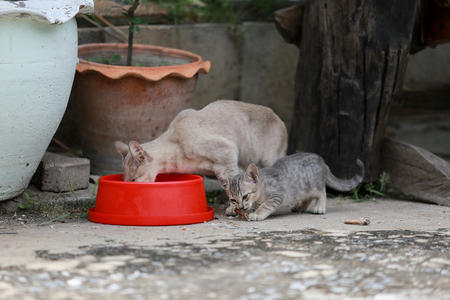 Cat and kitten are eating Thai food.